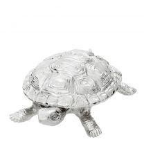 Box Tortoise M