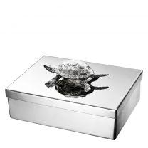 Jewel Box Tortoise